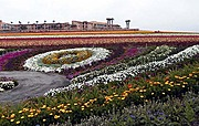 The Color Project at the Flower Fields