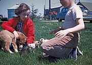 Children Playing with a Puppy and Kittens