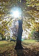 Sun Through a Tree in Autumn