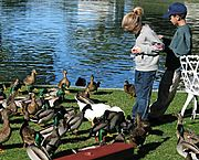 Kids Feeding Ducks