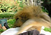 Squirrel Leaping (Motion Blur)