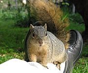 Squirrel Sitting on my Ankles