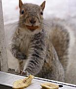 Squirrel with an Almond