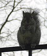 A Squirrel Watching Me
