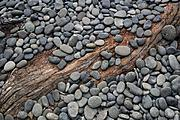 Driftwood and stones abstract