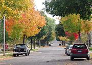 Fall Colors on Residential Street