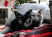 Two Cats at Christmas