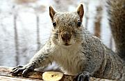 Unsatisfied Squirrel