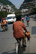 Man Bicycling Home with a Chicken