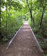 Straight Hiking Path at Wirth Park