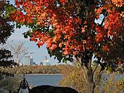 Green and Red Leafs, Lake Harriet and Minneapolis Skyline