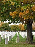Graves and Trees at the Fort Snelling National Cemetery
