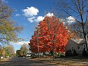 Residential Street on Clear Fall Day