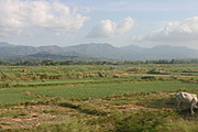 Farm Fields in Ilocos Norte, the Philippines