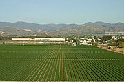 Orderly Rows of Crops Outside San Diego, CA