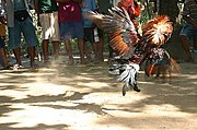 Cockfight in Ilocos Norte, the Philippines