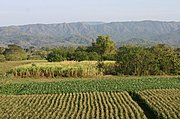 Farm Land in the Province of Ilocos Sur, Philippines