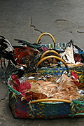 Two Bayongs Filled with Tied Native Live Chickens in Baguio Public Market, the Philippines