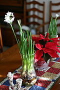 Flowers and Pointsettias on a Dining Room Table Setting
