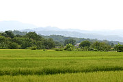 Rice Fields and Mountains in Ilocos Norte, the Philippines