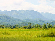 Farm Fields of Badoc, Ilocos Norte, the Philippines