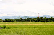 Rice Fields, Trees, Mountains, and a Cell Phone Tower in Ilocoso Norte