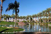 Pond and Pink Flamingos, Marriott Desert Springs Hotel