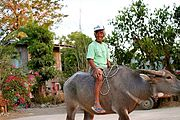 Man Riding a Carabou (Water Buffalo) in a Village in the Philippines