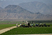 Farming Near Salton Sea, CA