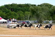 Milk Buds Horse Team, St. Croix County Fair