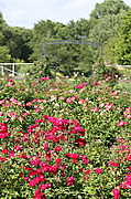 Lyndale Park Rose Garden, Minneapolis