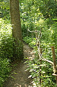 Walking Trail, U of M Landscape Arboretum