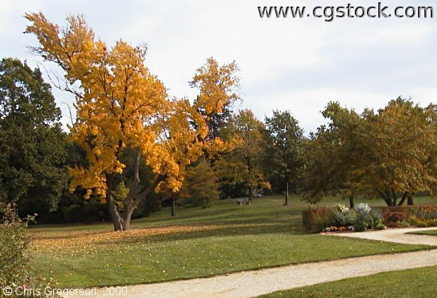 Yellow Tree in Lyndale Park