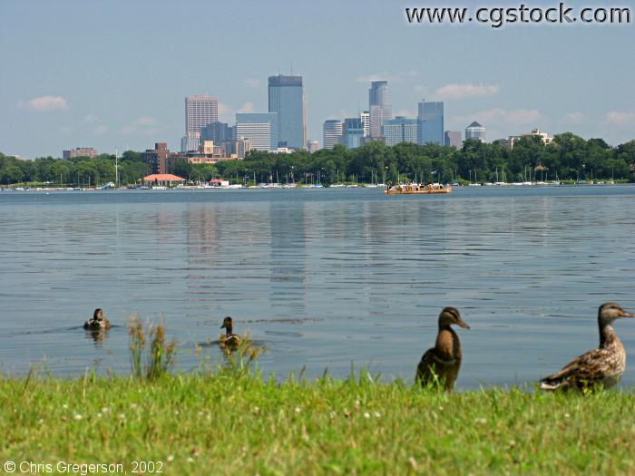 Lake Calhoun and Skyline with Ducks