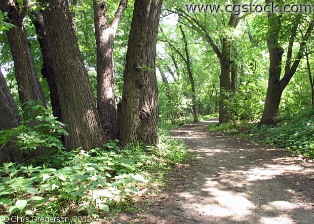 Path in Fort Snelling State Park