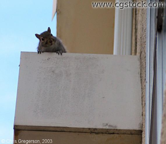 Squirrel on Air Conditioner