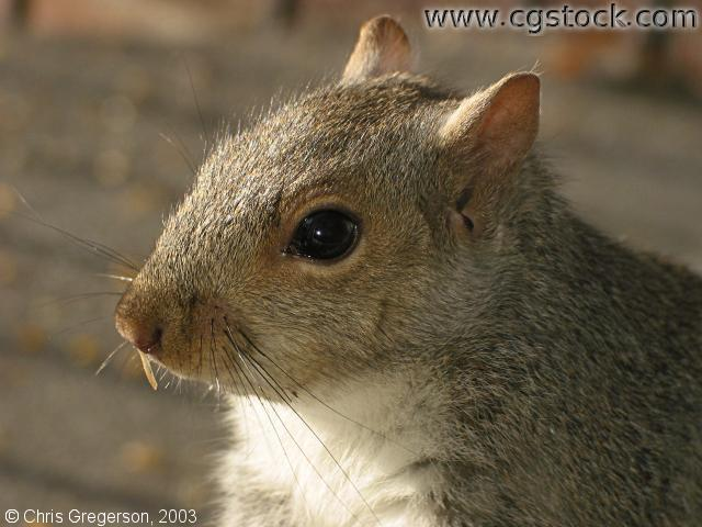Headshot of Stuart the Squirrel
