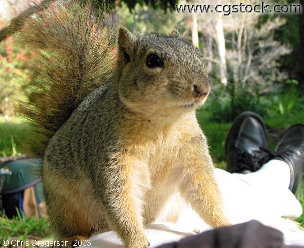 Squirrel Sitting on my Hip