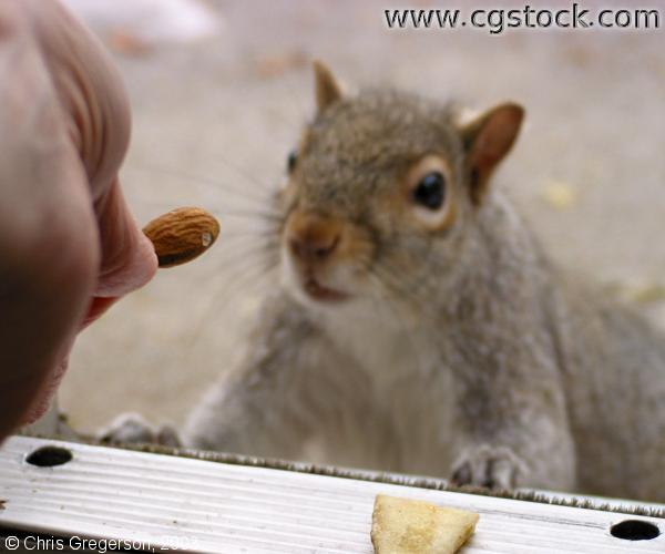 Feeding a Squirrel an Almond