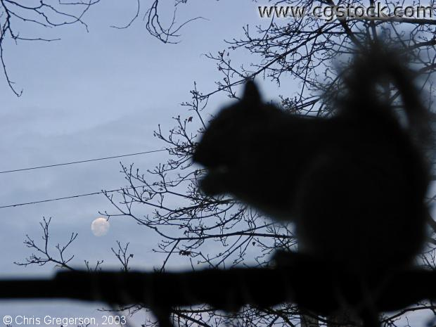 Squirrel and Moon