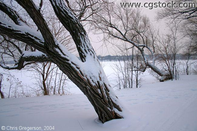 Trees by the Lake After Snowfall
