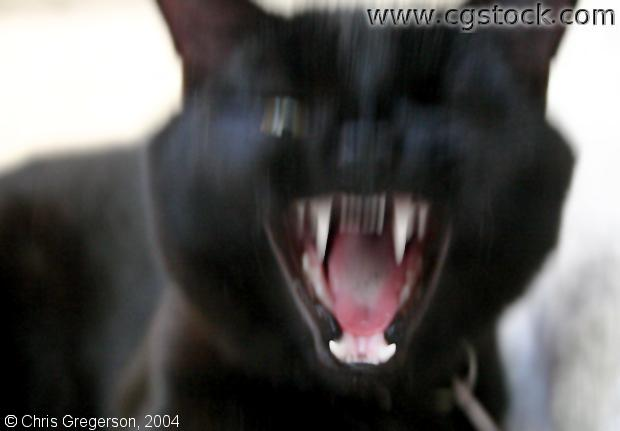 Cat's Fangs