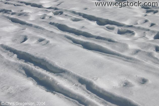 Footprints and Ski Tracks in Snow