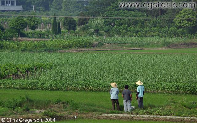 Workers and Farm Field