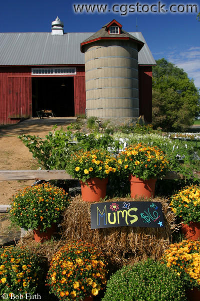 Traditional Red Barn and Silo with Mums for Sale