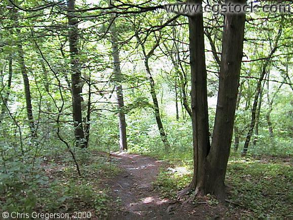 Downhill Path at Wirth Park