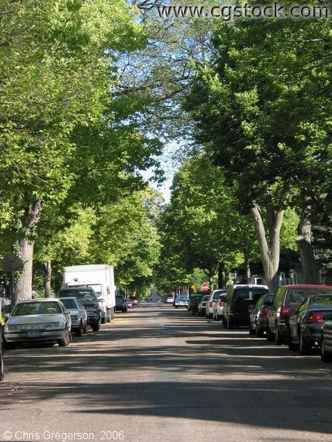 Residential Street in Central Minneapolis