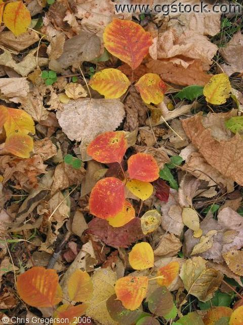 Dried Brown Leafs and Yellow Leafs