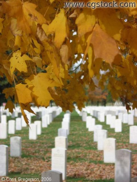 Yellow Leafs and Grave Markers, Fort Snelling National Cemetery