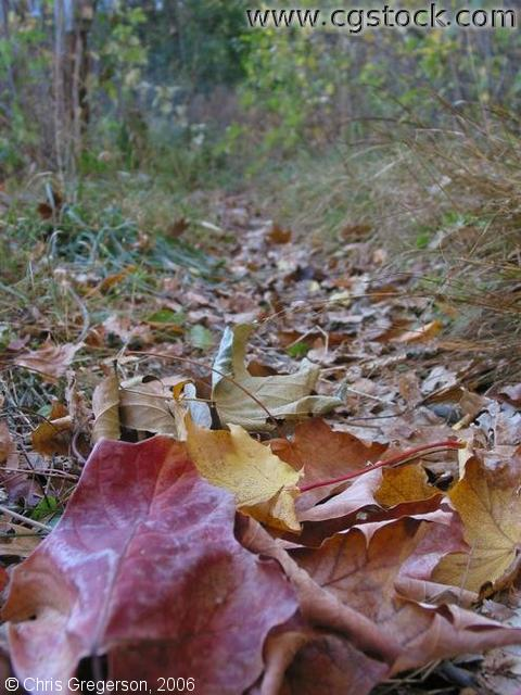 Close-Up of Trail Covered with Fallen Leafs